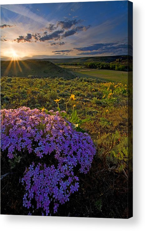 Wildflowers Acrylic Print featuring the photograph Last Light Of Spring by Mike Dawson