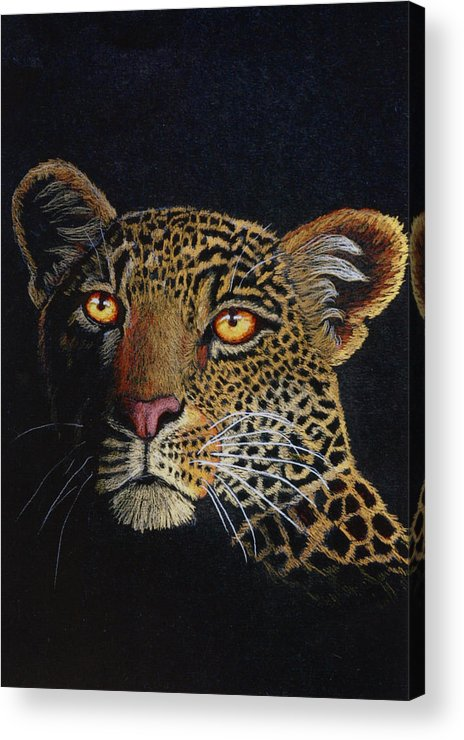 Leopard Acrylic Print featuring the drawing Leopard In The Dark by Lorraine Foster