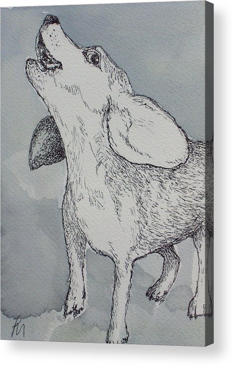 Dog Acrylic Print featuring the drawing Nootchie by Pete Maier