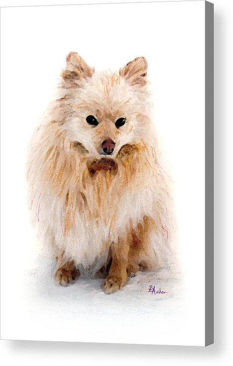 Pomeranian Acrylic Print featuring the pastel Pip by Brent Ander