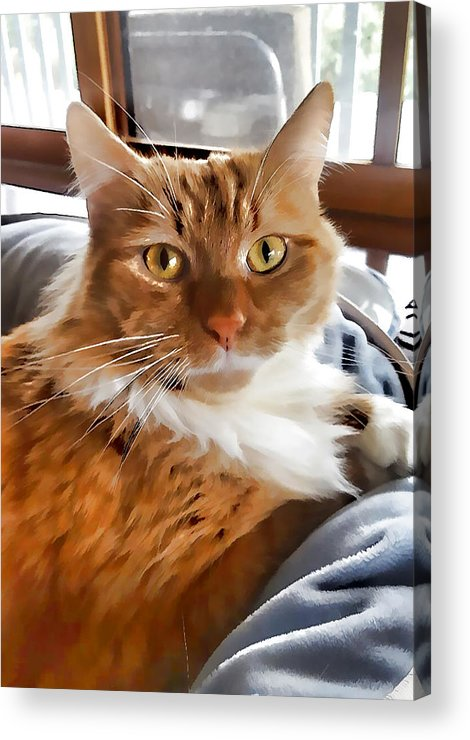 Red-haired Kitten Acrylic Print featuring the painting Red-haired Kitten by Jeelan Clark