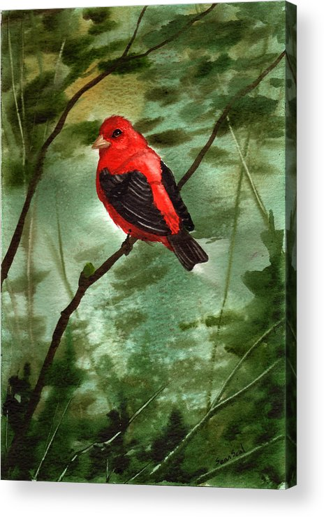 Birds Acrylic Print featuring the painting Scarlet Tanager by Sean Seal