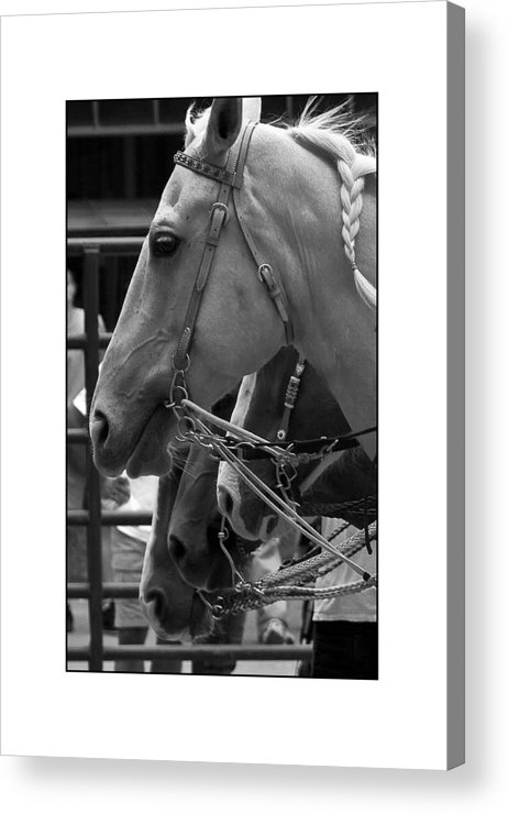 Horse Acrylic Print featuring the photograph Show Horses by Filipe N Marques
