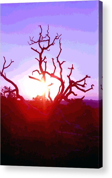Desert Acrylic Print featuring the photograph Sunset Through Silhouetted Tree In Desert 2 by Steve Ohlsen