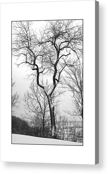 Tree Acrylic Print featuring the photograph Tree On The Western Promenade by Filipe N Marques