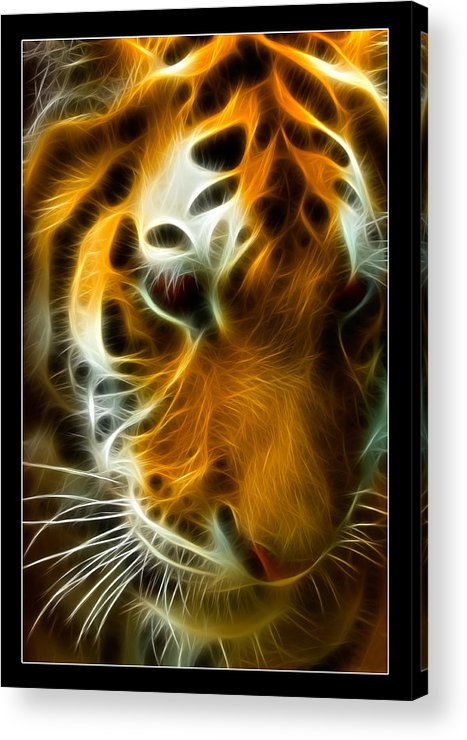 Bengal Acrylic Print featuring the photograph Turbulent Tiger by Ricky Barnard