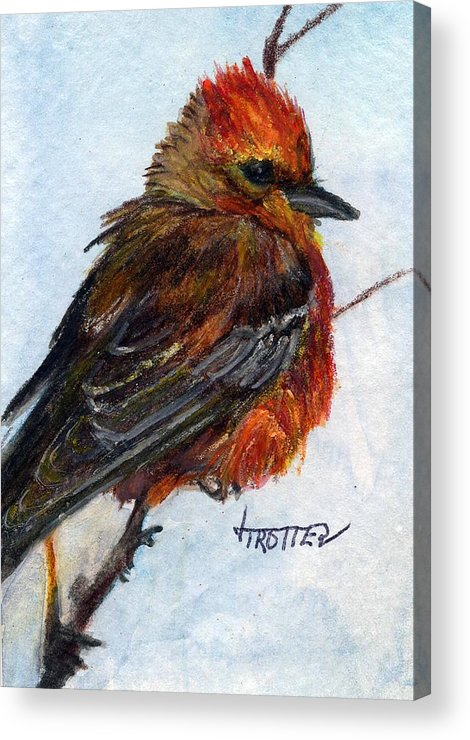 Animal Acrylic Print featuring the painting Vermillion Flycatcher by Jimmie Trotter