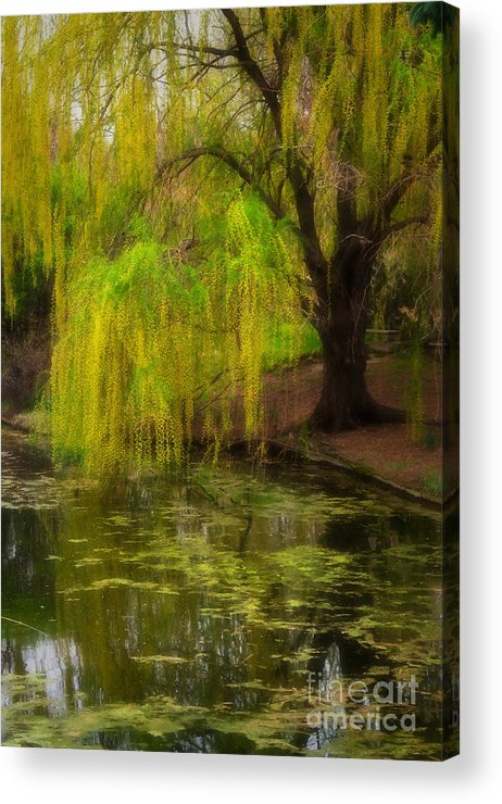 Botanica Acrylic Print featuring the photograph Weeping Pond by Fred Lassmann