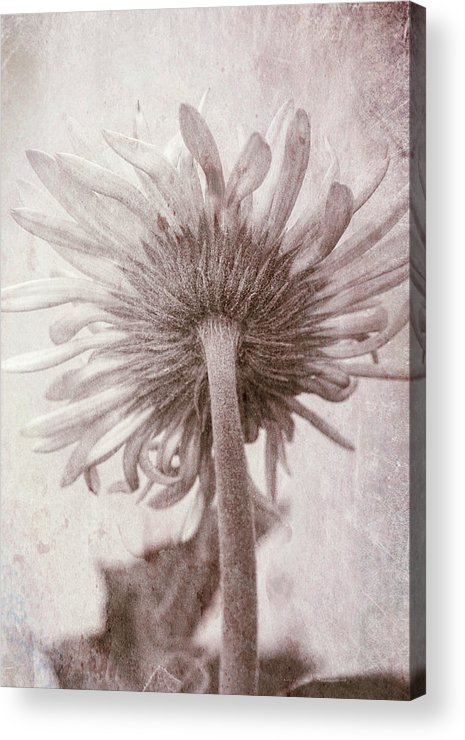 Photography Acrylic Print featuring the photograph Dream World by Susan Campbell