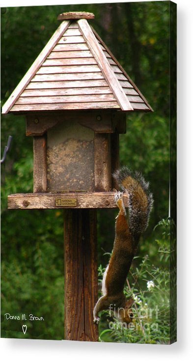 Bird Feeder Acrylic Print featuring the photograph Hang On by Donna Brown