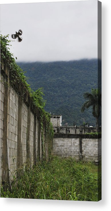 Wall Acrylic Print featuring the photograph Flying Above The Wall by Matthew Fredricey
