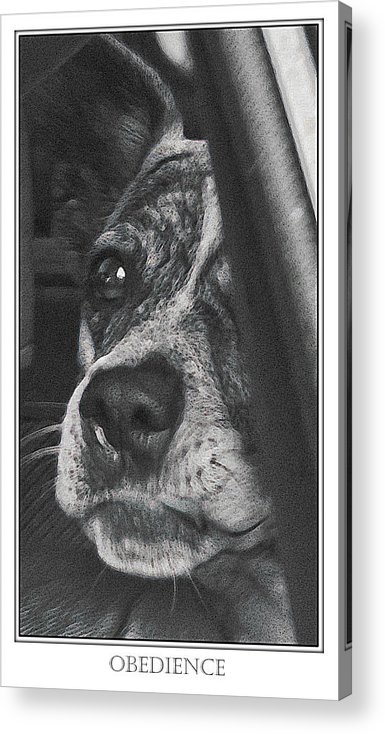 Dog Acrylic Print featuring the photograph Jazz by Karen W Meyer