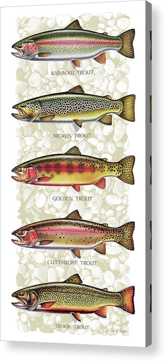 Five Trout Panel Acrylic Print featuring the painting Five Trout Panel by JQ Licensing