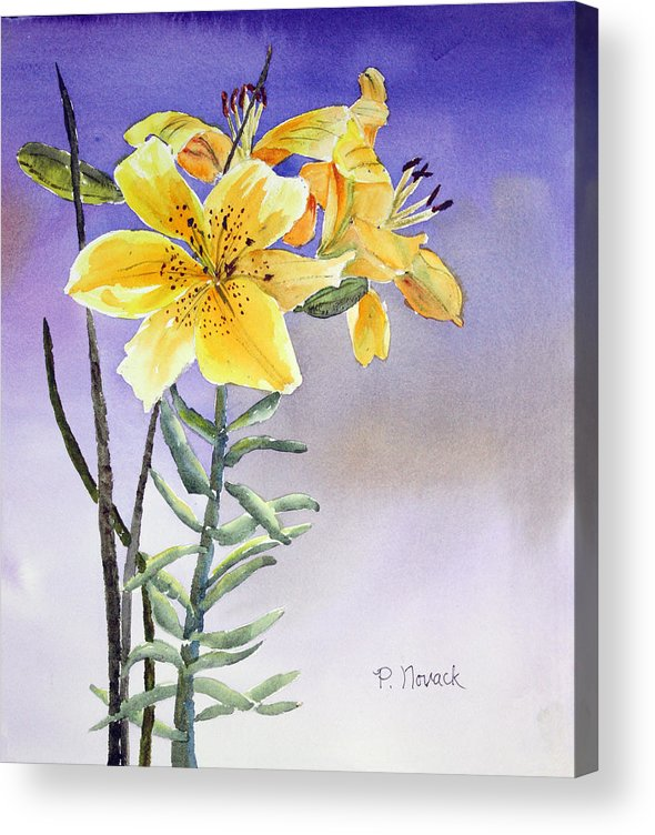 Lily Acrylic Print featuring the painting Daylilies by Patricia Novack