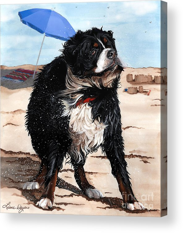 Bernese Mountain Dog Acrylic Print featuring the painting Dog Days Of Summer by Liane Weyers