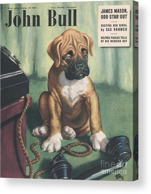 1940�s Acrylic Print featuring the drawing John Bull 1949 1940s Uk Dogs Magazines by The Advertising Archives