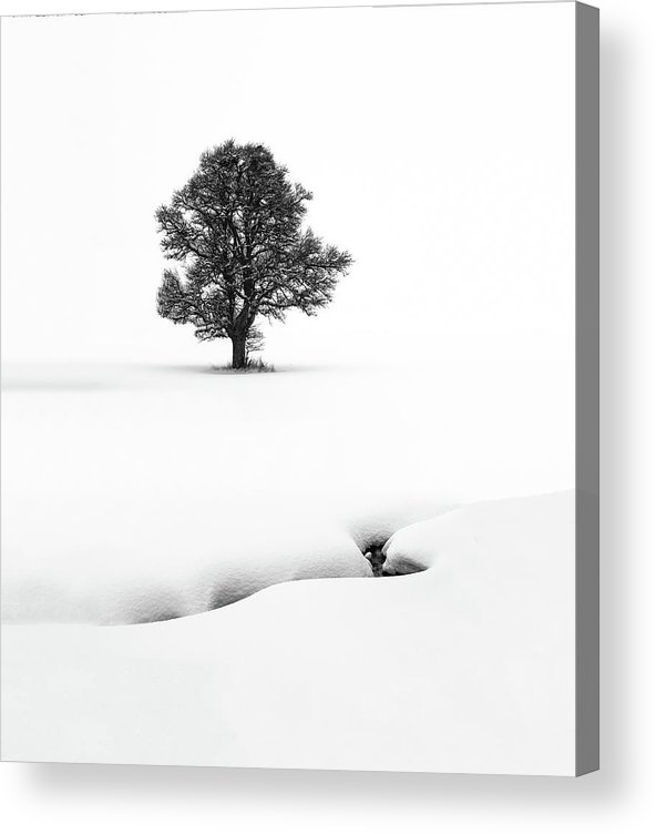 Tree Acrylic Print featuring the photograph Le Solitaire by Marc Pelissier