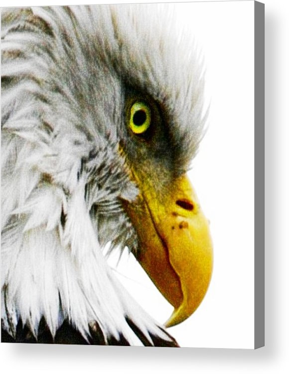 Bald Eagle Acrylic Print featuring the digital art Eagle Eye by Carrie OBrien Sibley