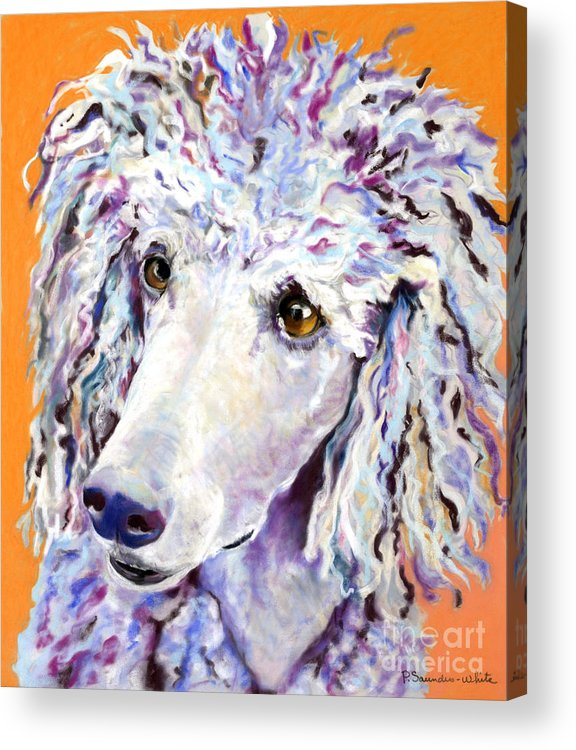 Standard Poodle Acrylic Print featuring the pastel Above The Standard  by Pat Saunders-White