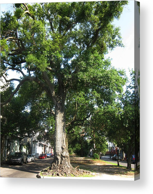 Tree Acrylic Print featuring the photograph In The Neutral Ground by Tom Hefko