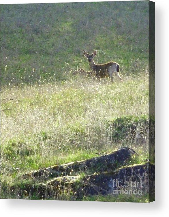 Deer Acrylic Print featuring the photograph Quiet Neighbor by JoAnn SkyWatcher