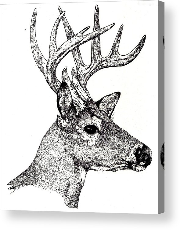 Deer Acrylic Print featuring the drawing Ten Point Buck by Debra Sandstrom