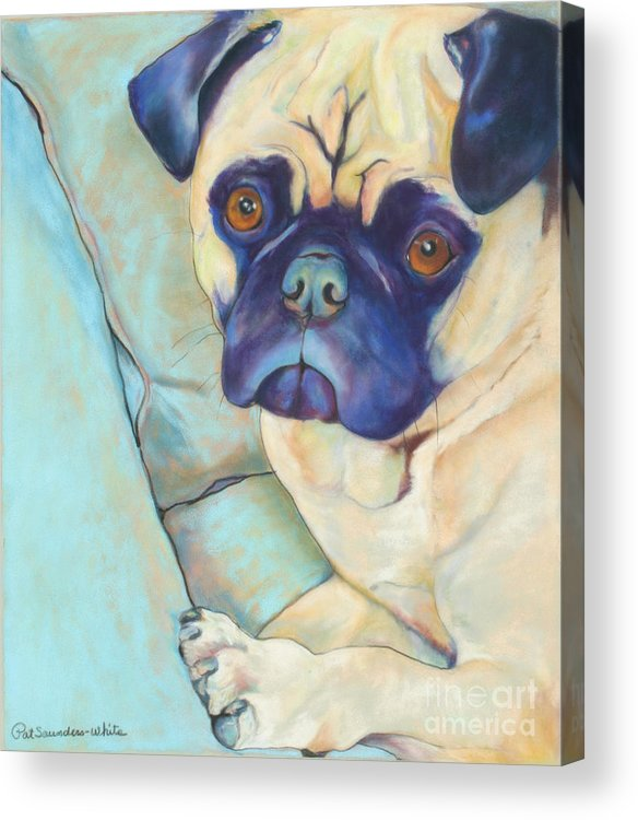 Pug Acrylic Print featuring the pastel Valentino by Pat Saunders-White
