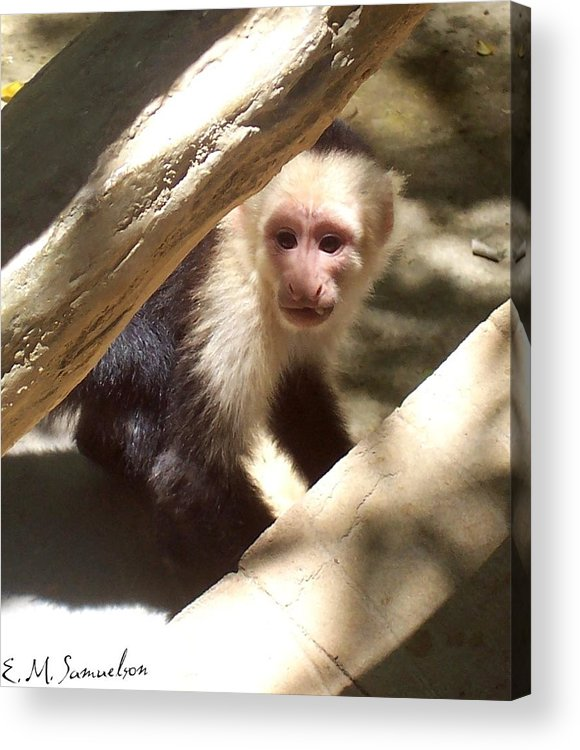 Monkey Acrylic Print featuring the photograph Wild Little Monkey by Elise Samuelson