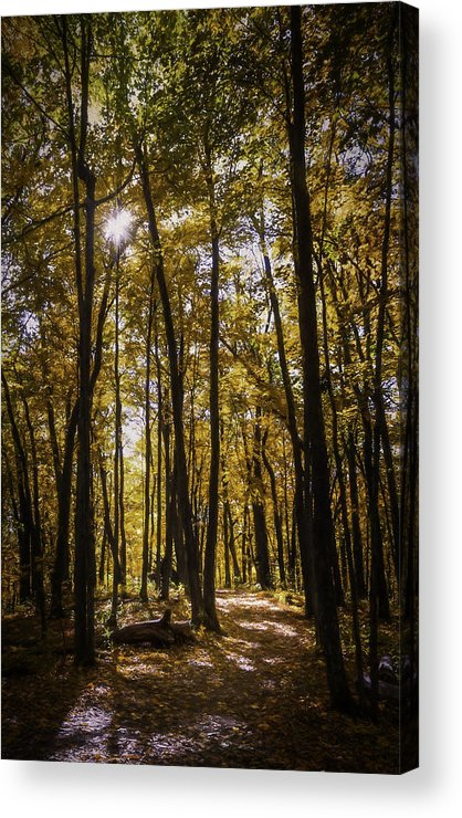 Autumn Acrylic Print featuring the photograph Autumns Fire by Scott Norris
