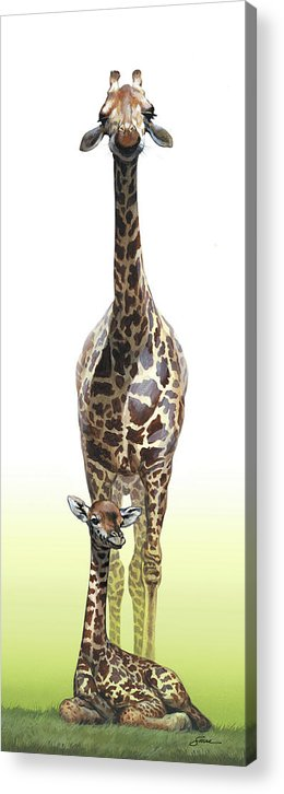 Giraffes Acrylic Print featuring the painting Mothers Watch is keeping by Harold Shull