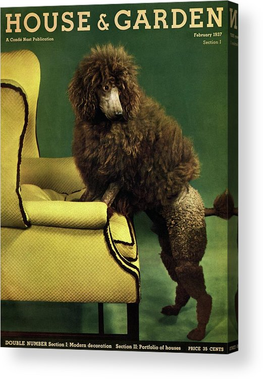 Illustration Acrylic Print featuring the photograph A House And Garden Cover Of A Poodle by Anton Bruehl