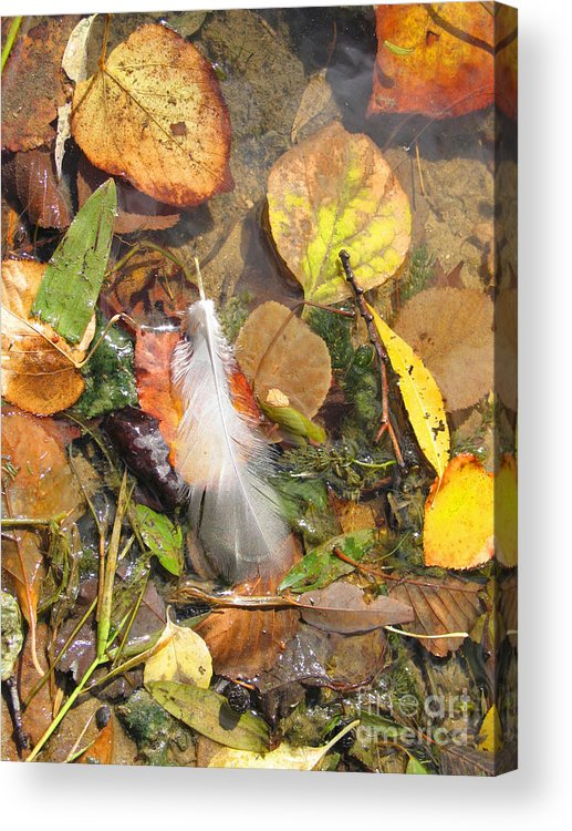 Autumn Acrylic Print featuring the photograph Autumn Leavings by Ann Horn