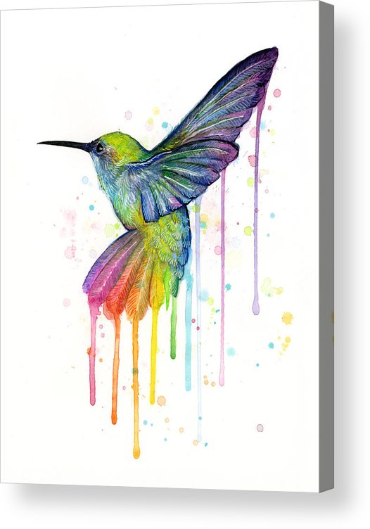 Hummingbird Acrylic Print featuring the painting Hummingbird of Watercolor Rainbow by Olga Shvartsur