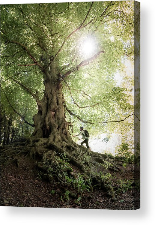 People Acrylic Print featuring the photograph Old Tree by Michal Baran