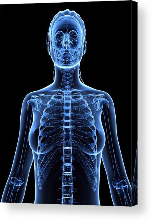 Vertical Acrylic Print featuring the digital art Female Upper Body, Artwork by Sciepro