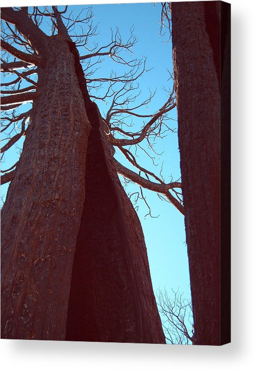 Nature Acrylic Print featuring the photograph Burned Trees 6 by Naxart Studio