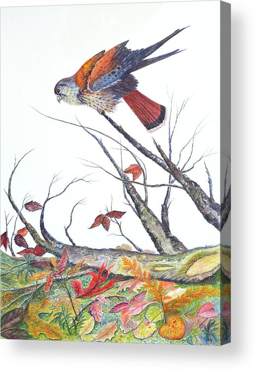 Bird Acrylic Print featuring the painting American Kestrel by Ben Kiger