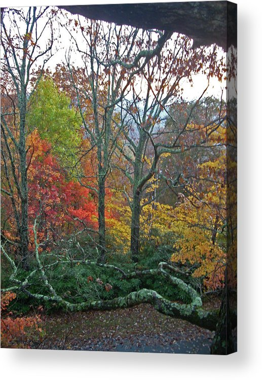 Trees Acrylic Print featuring the photograph Fall in the NC Mountains by Beebe Barksdale-Bruner