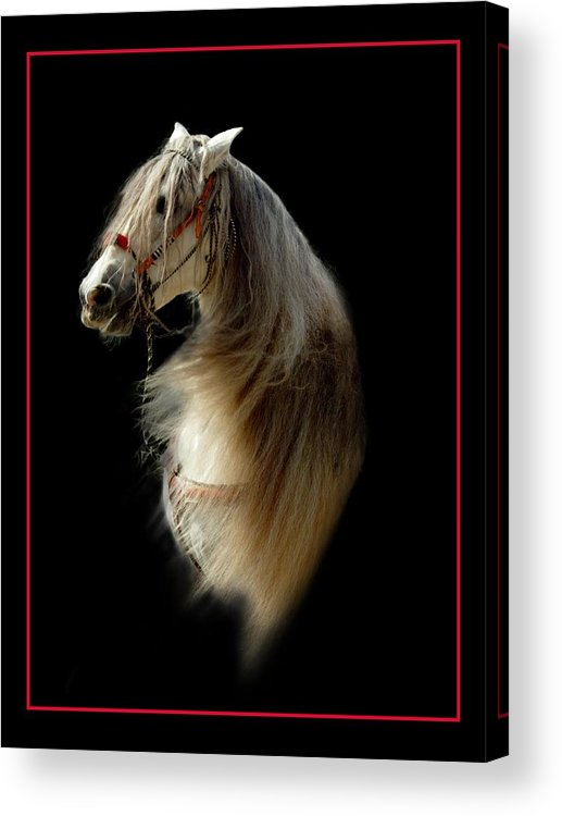 Horse Acrylic Print featuring the photograph Glamour Shot by Richard Gordon
