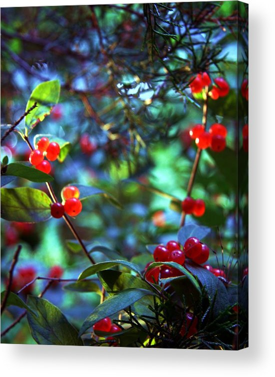 Nature Acrylic Print featuring the photograph Art by Mitch Cat