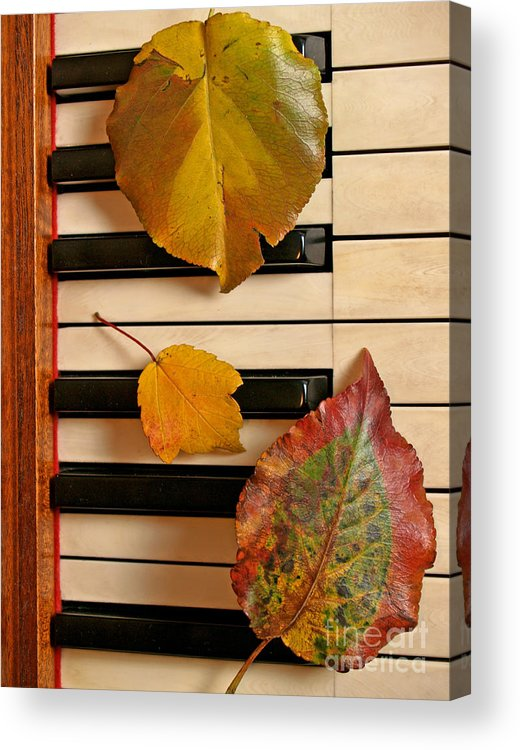 Piano Acrylic Print featuring the photograph Autumn Leaf Trio on Piano by Anna Lisa Yoder