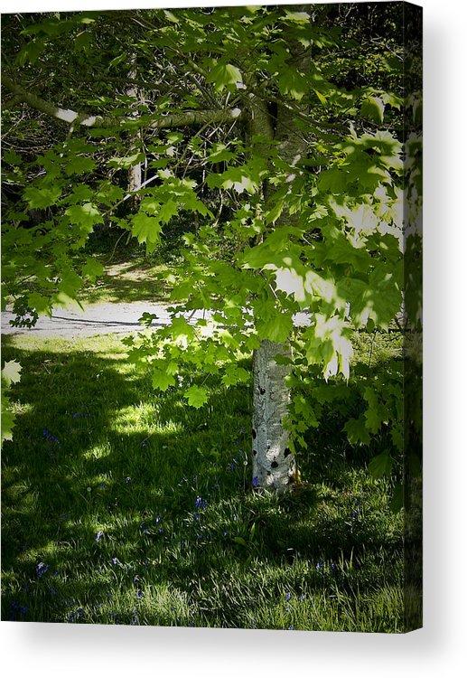 Irish Acrylic Print featuring the photograph Bluebells in Killarney National Park Ireland by Teresa Mucha