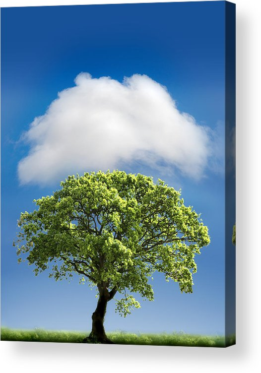 Tree Acrylic Print featuring the photograph Cloud Cover by Mal Bray
