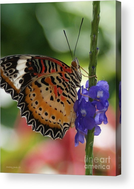 Butterfly Acrylic Print featuring the photograph Hanging on by Shelley Jones