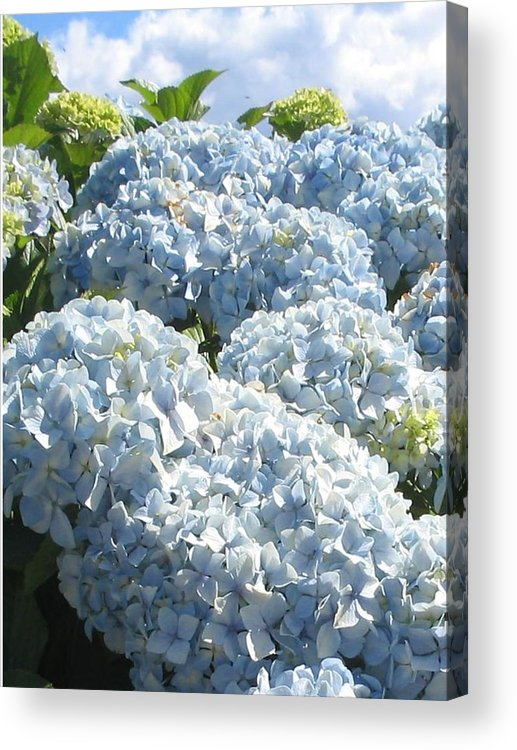 Blue Hydrangea Acrylic Print featuring the photograph Hydrangeas by Valerie Josi