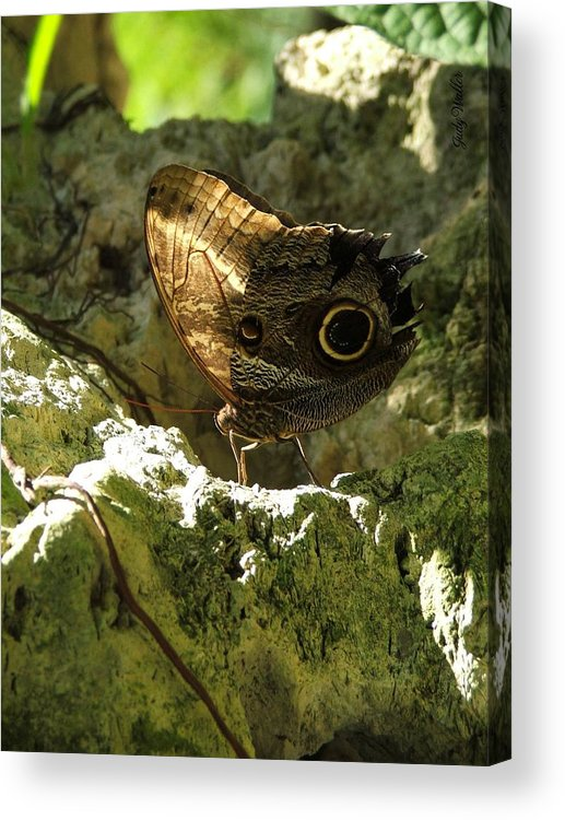 Butterfly Acrylic Print featuring the photograph Posing In The Light by Judy Waller