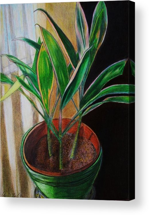 Plants Acrylic Print featuring the painting Red Sister Cordyline by Arvin Nealy