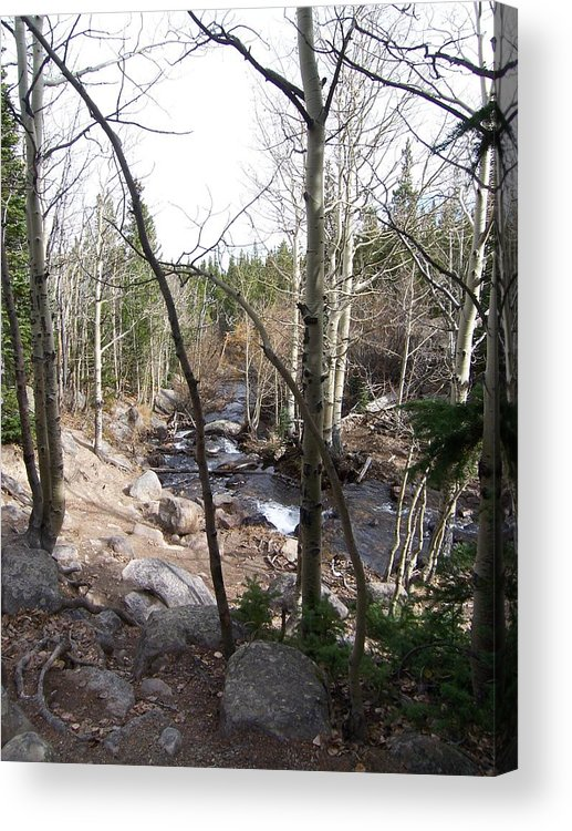 Landscape Acrylic Print featuring the photograph River Through the Trees by Lisa Gabrius