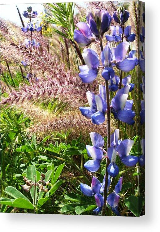 Flower Acrylic Print featuring the photograph Wild Flower by Shari Chavira