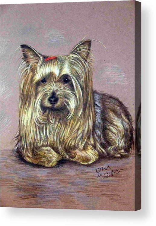 Dog Acrylic Print featuring the drawing Yorkshire Terrier by Nicole Zeug